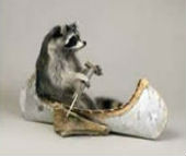 coon taxidermy 11