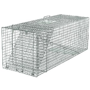 A Coon Trap